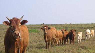 牛結節疹疫苗注射100% 生物安全勿鬆懈