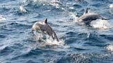 游泳者受困海中12小時 海豚或提供神祕幫助