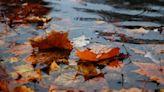 6縣市豪大雨「入秋最強東北風」報到 全台降溫入夜最低17度
