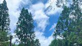 四季都有不同的美麗,阿里山國家森林遊樂區