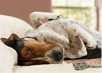 www.petmd.com/dog/conditions/cardiovascular/c_dg_septic_shock