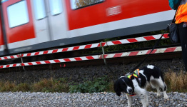 German dogs to sniff out wildlife at building sites to speed up work