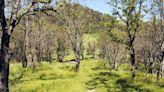 Napa County Land Trust adds to wildlife corridor in northwest Calistoga