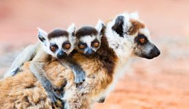 The cutest family moments from the animal kingdom