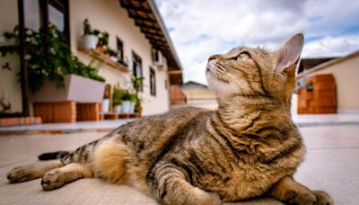 關於貓咪的25條冷知識,總有一條你不知道