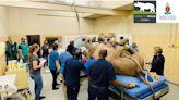 南非首隻成年犀牛斷層掃描 1噸重巨獸四肢綑綁躺床奇景曝光