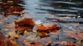 30-50 mm of heavy rain, strong winds in parts of Ontario this week