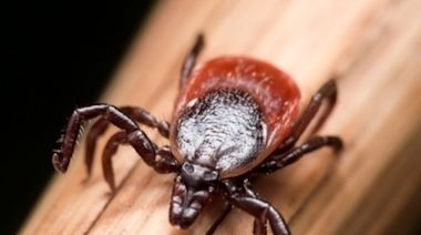 Ticking Time Bomb? Gulf Coast Ticks Spotted In CT