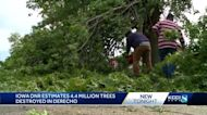 Iowa DNR reports 4.4 million trees lost in derecho