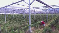 Solar panels help winemaker fight climate change