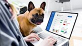 Pawp Raises $13M Series A to Make Quality Pet Care Affordable and Accessible