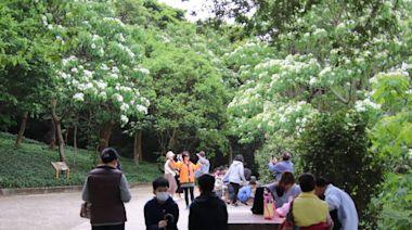 竹縣5/22「遶桐花」管制進場人數 取消茶席禁飲食