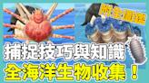 【集合啦!動物森友會】全海洋生物攻略!捕捉技巧公開 附全海洋生物圖鑑 動森攻略