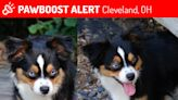 Cleveland child is 'heartbroken' after emotional support dog goes missing