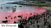 The Faroe Island dolphin slaughter is 'heritage' that belongs in the past