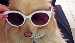Survey Says Nearly Half of Millennials, Gen Z-ers Spend Money on Their Pets' Social Media (Duh)