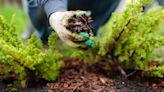 Bruce Kreitler: Mulch ado about fall landscape maintenance