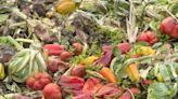 【食力】全球糧食浪費不只13億噸!加上被忽視的農業生產浪費,剩食總量多1倍