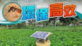 太陽能滅蚊機節能好處多 環團促政府全面採用
