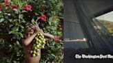 To Survive Pandemic Food Shortages, Venezuelans Go Back to the Land