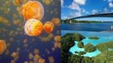 與水母、七彩魚共舞!帛琉3天2夜必朝聖6大景點:牛奶湖、水母湖、干貝城