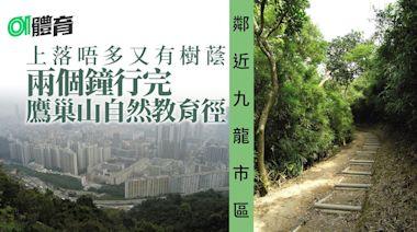 九龍行山路線|2個鐘行完鷹巢山自然教育徑 穿梭林蔭賞城市景色