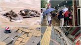 【新聞看點】鄭州多地塌方嚴重 農村傷亡不讓報