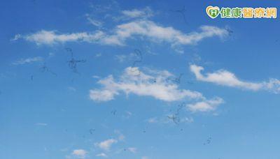 眼前出現長條型懸浮物當心是退化性飛蚊症! 醫師告訴你如何治療 | 健康 | NOWnews今日新聞
