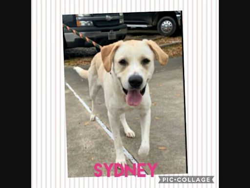 Meyerland Pets Who Need A Home: Meet Sydney, Laila, Alfred & More