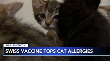 Swiss scientists testing cat allergy vaccine