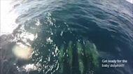 Ship's Bow-Cam Captures Dolphins Gliding Through Water Off Florida Coast