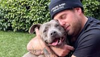 "Jonah Hill Rescued a ""Beautiful, Extra Cuddly"" 3-Year-Old Pitbull, and She's So Cute"