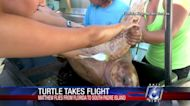 New sea turtle coming to area from Florida Keys