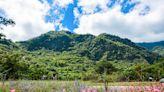 台東景點 80%未開發老少咸宜的森林遊樂區 來知本泡湯外也要來走一走享受山裡清新空氣   生活   NOWnews今日新聞