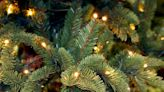 The 9 Best Outdoor Christmas Lights to Spread Holiday Cheer