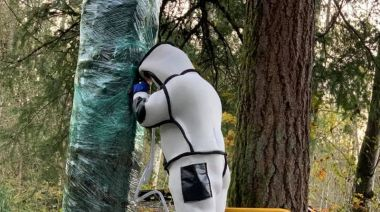 'Murder hornet' nest vacuumed out of tree in Washington