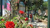El Festival de la Rosa vuelve a florecer en el Parque Araucano