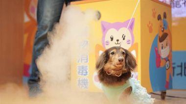 新冠肺炎疫情延燒 寵物帶口罩恐中暑