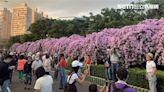 一年僅7天!泰山隱藏秘境「紫花海瀑布」 最佳賞花期曝光