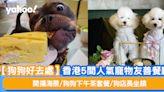 【狗狗好去處】香港5間人氣寵物友善餐廳 開揚海景/狗狗下午茶套餐/狗店長坐鎮 | 附周邊寵物景點推介