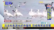 流浪狗衝濕地抓魚獵鳥 恐威脅黑面琵鷺