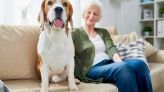3 Quality Pet Stocks To Pick Up Before They Rally