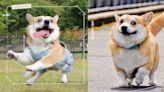戲精是你?日本爆笑「崩壞小柯基」五官亂飛全都錄,超浮誇emoji引網朝聖! | 寵物圈圈 | 妞新聞 niusnews