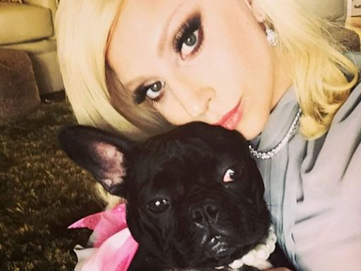 Lady Gaga's dog walker shot and two of her French Bulldogs stolen
