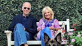 Meet the first dogs: The Bidens bring pets back to the White House