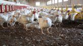 東莞又現H5N6禽流感確診 專家回應(圖) - - 社會百態