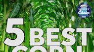 Viewers' Choice 2021: Best corn maze in New Hampshire