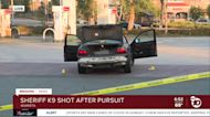 Sheriff's K-9 shot after pursuit