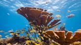 達成全球自然保護協議是中國展示全球領導力的歷史契機