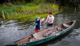 What is a living shoreline, and how could it save one of NC's most valuable ecosystems?